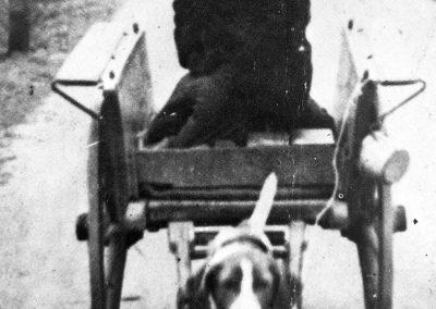 Hondenkar 1930
